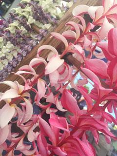 花の写真・画像素材[692849]
