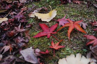 秋の写真・画像素材[995104]