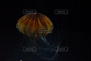 クラゲの写真・画像素材[1398297]