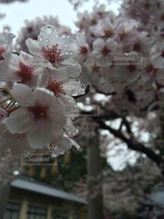 花の写真・画像素材[575901]