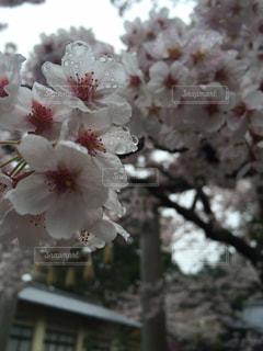 花の写真・画像素材[575902]