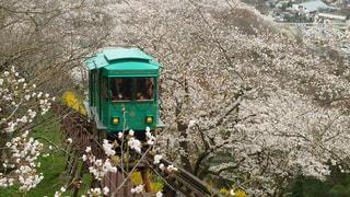 No.574609 桜