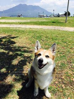 No.574621 犬