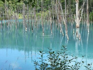 湖の写真・画像素材[574616]