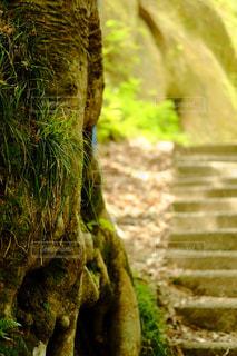 森林の写真・画像素材[575585]