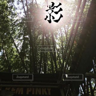 近くの木のアップの写真・画像素材[740797]