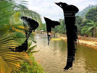 水の体の横にあるヤシの木のグループの写真・画像素材[1137710]