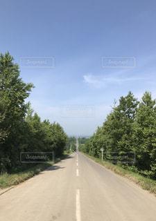 通り側の木と空の道の写真・画像素材[1376648]