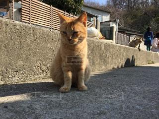 猫の写真・画像素材[576261]