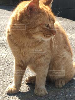 猫の写真・画像素材[576263]