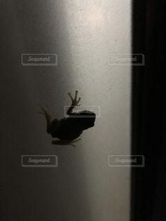 カエルの写真・画像素材[576307]