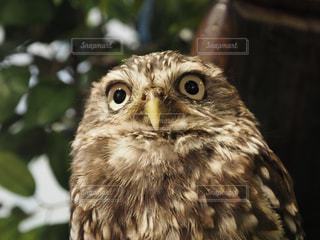鳥の写真・画像素材[580900]