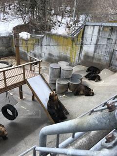 熊の写真・画像素材[577138]