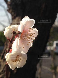自然 - No.328840