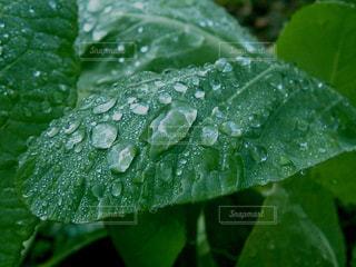 雨の写真・画像素材[577863]