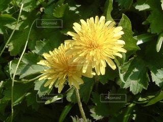 春の写真・画像素材[577876]