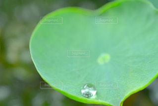雨の写真・画像素材[581404]