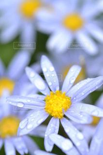 花の写真・画像素材[581411]