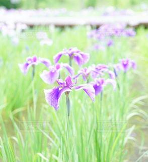 花の写真・画像素材[583728]