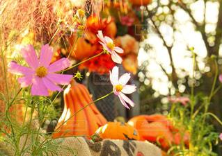 花の写真・画像素材[584633]