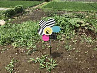 農業体験の写真・画像素材[593472]