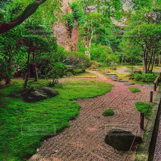 中庭の写真・画像素材[578122]