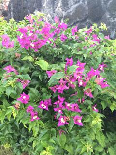 花の写真・画像素材[578570]