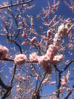 春の写真・画像素材[618199]