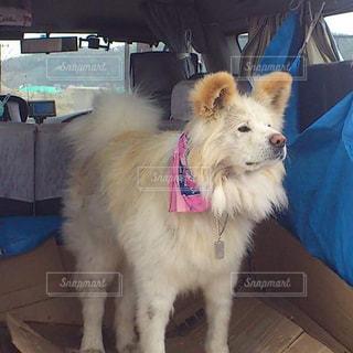犬の写真・画像素材[646983]
