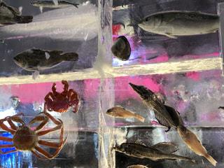 魚氷の写真・画像素材[2962821]