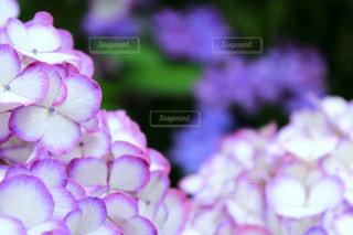 近くの花のアップの写真・画像素材[1237230]