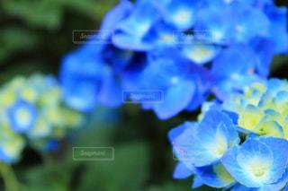 近くの花のアップの写真・画像素材[1237238]