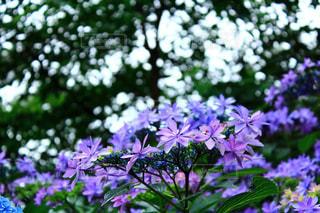 近くの花のアップの写真・画像素材[1237242]