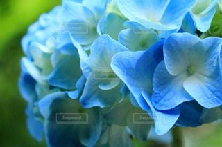 近くの花のアップの写真・画像素材[1237244]