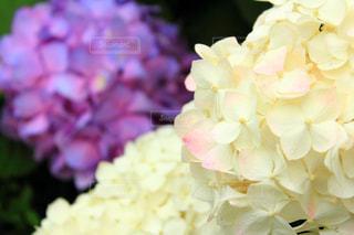 近くの花のアップの写真・画像素材[1237250]