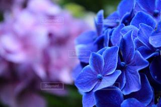 近くの花のアップの写真・画像素材[1237257]