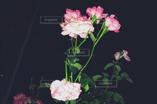 花の写真・画像素材[578974]