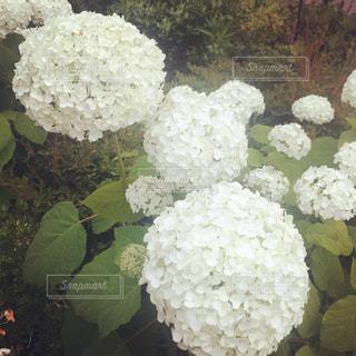 野菜の写真・画像素材[580251]