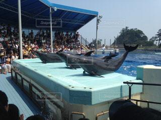 イルカの写真・画像素材[579249]