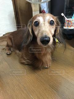 犬の写真・画像素材[579398]