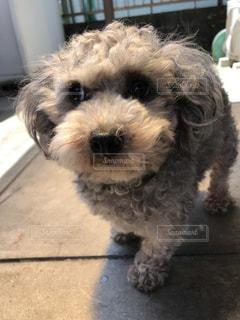 犬の写真・画像素材[579415]