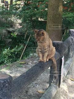 猫の写真・画像素材[581572]