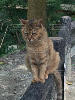 猫の写真・画像素材[581573]