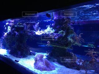 魚の写真・画像素材[581986]