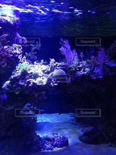 魚の写真・画像素材[581987]