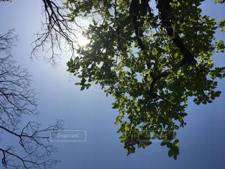 自然の写真・画像素材[580275]