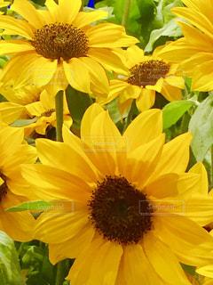 花の写真・画像素材[580586]