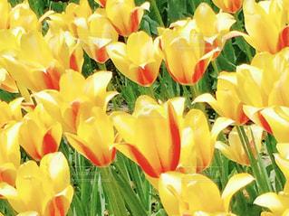 花の写真・画像素材[582072]