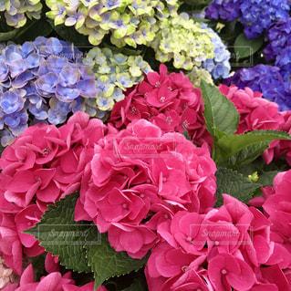 花の写真・画像素材[582079]