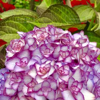 花の写真・画像素材[582089]